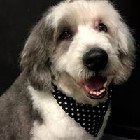 my dog groomer
