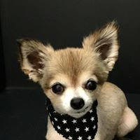 dog grooming services near me