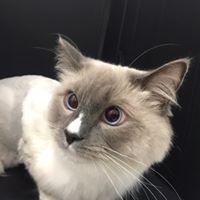 Best Cat Groomer Brisbane