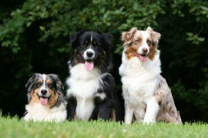 Fur Dog Grooming