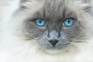 Cat Groomer North Lakes