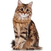 Best Cat Groomer Near Me